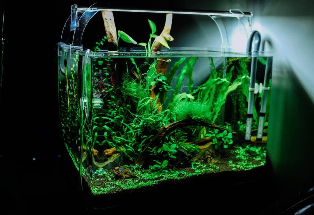 best water filter for axolotl