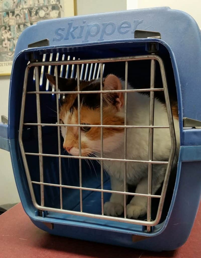 Best cat carrier forvet visit
