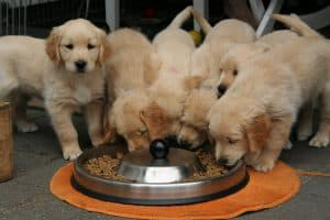 Best puppy food for weaning