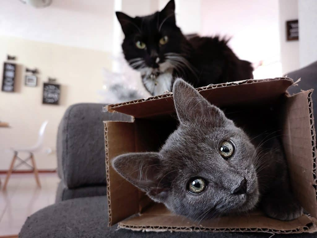 Why do cats love empty boxes